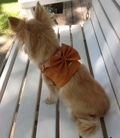 orange cotton lace and big bow  big bow small dog by ChakaCoco