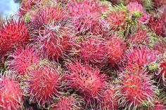 RAMBUTAN; cut away sea urchin like outer skin to reveal a sweet core. very very tasty.