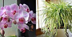 INŠPIRÁCIE | Báječné Ženy Aloe Vera, Plants, Planters, Plant, Planting