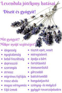Doterra, Massage, Lavender, Hair Accessories, Herbs, Nature, Wellness, Beauty, Diy