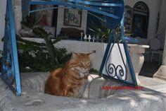 Σημαντικό έργο φροντίδας και περίθαλψης αδέσποτων ζώων από τον Δήμο Μυκόνου