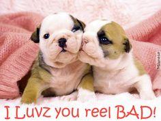 PUPPY LOVE - Dogs & Animals Background Wallpapers on Desktop Nexus ...