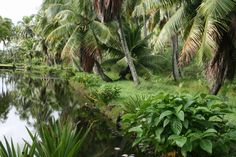 Elvis' Coco Palms ~ Closed for more than 20 years, its grounds are still beautiful ~ Kauai, Hawaii