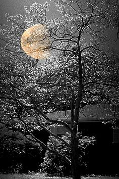 Moonlight. Photograph. Film.  Nellie Vin©Photography. Limited Edition100 Sold OUT