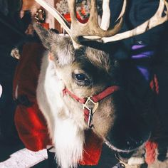 Eagle River Alaska  #FareCompare  Highlighting the holidays across the world.  Share your travel pics with us and the best will be featured!  Photo by @livinginanotherlanguage