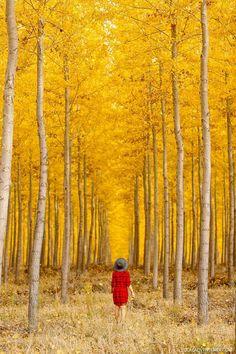 Boardman Tree Farm, Columbia River Gorge, Oregon in Autumn // localadventurer.com