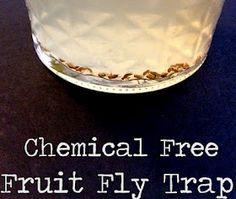 Fruit fly trap.