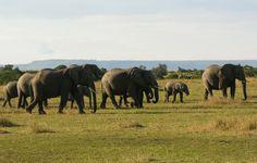 #Elephants moments in #Kenya ...   #reiseknipse #travel #safari #travelphotography #wildlife #kenya #wildlife