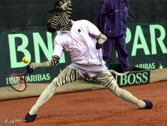 das Zebra & das Tennis