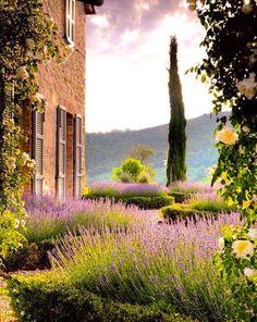 Lavender blooms in the garden of the Castillo di Reschio (Umbria, Italy)