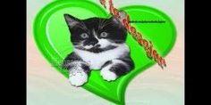 Mensagem para desejar boa tarde a todos que você tem no coração !!