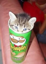 a quien no les gusta un gatito??? y a quien no le gustan unas pringles?? si te gustan las dos aca tenes las dos combinaciones