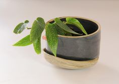 Pot for plants with build-in saucer.