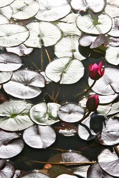 Penny on the lilly pond in Balboa Park San Diego - Photo by Amy Laurel Hegy @A Tale of Two Tramps