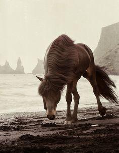myequinedlife: she is great!! http://www.gigjaeinars.com/gallery/56656/horses/