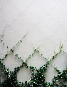 Garden landscape ideas, create a beautiful climbing plant wall.