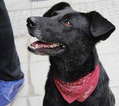 """Negro Matapacos: Chile's """"riot dog"""" Old Age, Baby Love, Samurai, History, Dogs, Animals, Working Class, Detective, Revolution"""