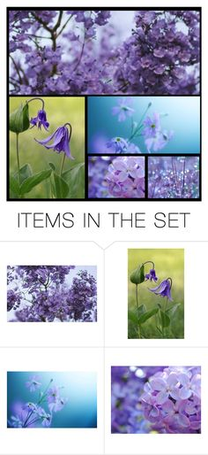"""Purple Family Mood Board"" by enchanticals ❤ liked on Polyvore featuring art, purple, Flowers and nature"