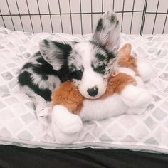*corgi sleeping on a corgi* Login Source by eehazen The post Login appeared first on Kuba Dog Life. Cute Corgi Puppy, Corgi Dog, Cute Puppies, Cute Dogs, Teacup Puppies, Dalmatian Puppies, Cute Dog Toys, Dachshund Puppies, Cute Baby Animals