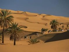 A caravan travels through the dunes and palm trees of the Sahara Desert. Photo by Carsten Peter. Trekking, Beautiful World, Beautiful Places, Wanderlust, The Dunes, Fishing Villages, Natural Phenomena, Africa Travel, Palm Trees