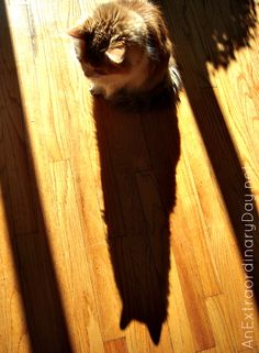 Just Me and My Shadow :: Poem