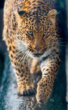 #bigcat