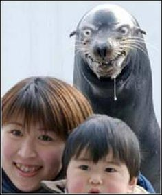 Pssst.  I think that mad seal behind you is drooling....I guess chinese people are the other fish meat?