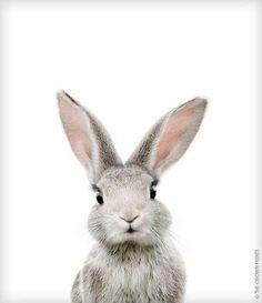 Kanin poster