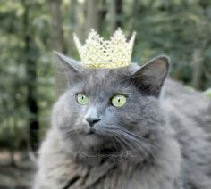 cats are the queens