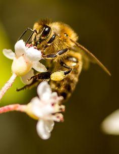 Todo para tu jardín: Flores y plantas que ayudan a las abejas