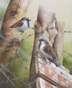 David Finney - Wildlife Artist & Illustrator | Birds