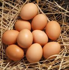 Australorp Chickens - Google Search