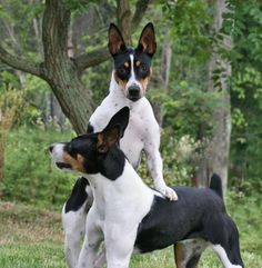 Briarbey Decker Terrier
