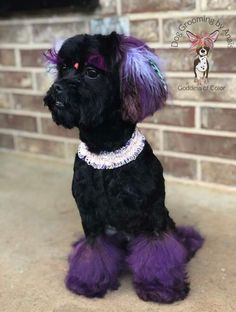 Grooming Shop, Pet Grooming, Standard Poodles For Sale, Extreme Pets, Present For Groom, Poodle Haircut, Creative Grooming, Pet Shop, Shih Tzu