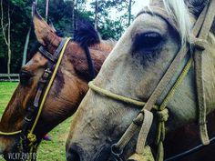 """""""Um cavalo é a poesia em movimento, ele pode nos emprestar a sua liberdade e a força que não temos."""" #fazendaaguasclaras #cavalgadasecologicas #viscondedemaua #maua #decorecomfoto  #vickyphotosinfantis #vickyphotos @vicky_photos_infantis https://www.facebook.com/vickyphotosinfantis http://websta.me/n/vicky_photos_infantis https://www.pinterest.com/vickydfay https://www.flickr.com/vickyphotosinfantis"""