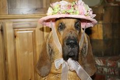 Barney the bloodhound's problems ran much deeper than his police handler could imagine! Read Confessions of a Pet Au Pair