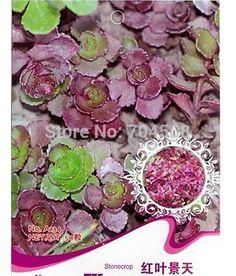 FD1661 Stonecrop Seed Sedum linn Garden Flower Seeds Rare ~1 Pack 50 Seeds~    / //  Price: $US $0.69 & FREE Shipping // /    Buy Now >>>https://www.mrtodaydeal.com/products/fd1661-stonecrop-seed-sedum-linn-garden-flower-seeds-rare-1-pack-50-seeds/    #MrTodayDeal.com