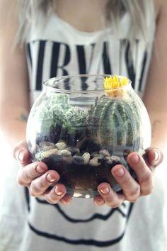 Hacer terrarios de plantas crasas con tarros de cristal