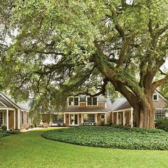 Although big trees could be dangerous to the home, it is absolutely stunning to see a large tree providing natural shade, and beauty to the home.