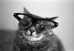 Smiling Cat Wearing Glasses- I wish my cats were this photogenic! Funny Cats, Funny Animals, Cute Animals, Crazy Cat Lady, Crazy Cats, Cool Cats, World Cat Day, Cat Wearing Glasses, Gatos Cool