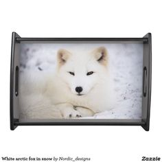 White arctic fox in snow serving tray