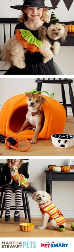 Wicked cute! Scare up some fun with your best friend with our #Halloween ideas from #MarthaStewartPets at @PetSmart.