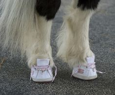 Do Ponies Wear Horse Shoes