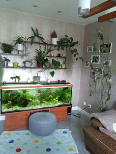 Realizing how houseplants interact with your indoor environment, can make you more aware of their needs as plant parents. Quiet morning Empty Fish Tank Reuse as Terrarium for Small Plants and Seedlings in Winter by attator Betta Aquarium, Home Aquarium, Freshwater Aquarium Fish, Aquarium Design, Kids Aquarium, Tropical Aquarium, Aquarium Ideas, Betta Fish, Turtle Aquarium