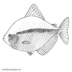 How to Draw a Fish: Step by step | Drawing Lessons
