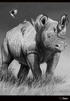 Coloring for adults - Kleuren voor volwassenen Wildlife Paintings, Wildlife Art, Animal Paintings, Animal Drawings, Rhino Animal, Rhino Art, Africa Painting, Africa Art, Elephants Never Forget