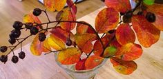 Preserve fall branches in glycerin/water solution for use indefinitely