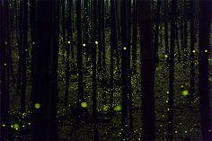 YumeCyan3.jpg 628×419 pixels