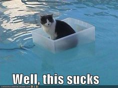 This cat was probably enjoying this box until it's human set it into the swimming pool.