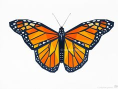 Butterfly, Monarch Butterfly, Geometric illustration, Bird and animal prints, Original illustrations